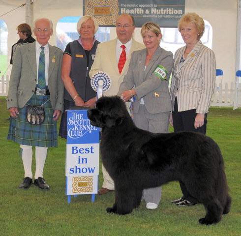 Chino goes Best in Show