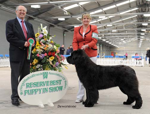 Forest wins Reserve Best Puppy in Show