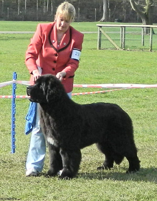 Forest as a puppy in the ring with Suzanne