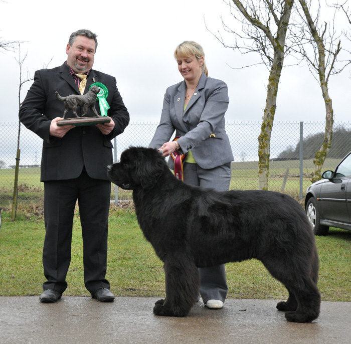 Luna Best In Show at Newfoundland Club Open Show