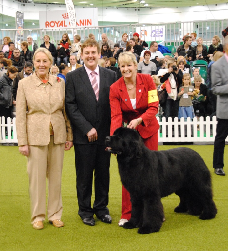 Sandbears Stride'N Style, JW winning his place in the Kennel Gazette Junior Warrant finals