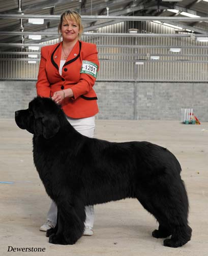 Stride is G3 at Working & Pastoral Breeds Association of Wales - April 2012