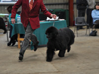 John with Barney at the Newfoundland Club Open Show 2010