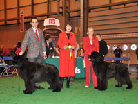 Jo with Sandbears Mack Super Liner for Bownbears at the Newfoundland Club Open Show 2010