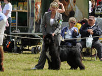 Sandbears Truly Scrumtious in the show ring