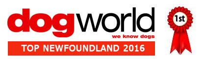 Dog World Top Newfoundland 2016