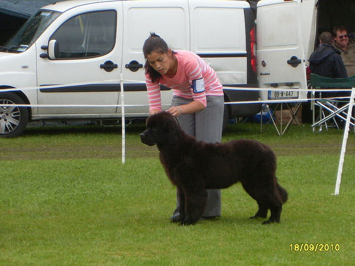 Kerrie in the ring as a puppy