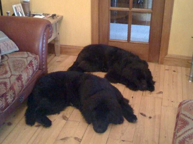 Wallace and Bruce laying on the lounge floor