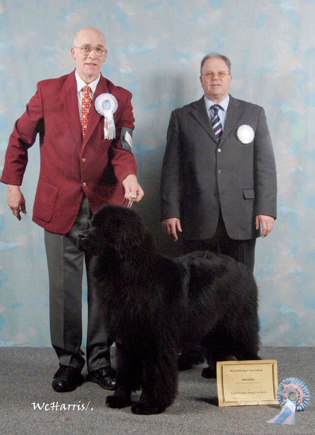 Will - Reserve Best Puppy in Show at Wirral Kennel Association